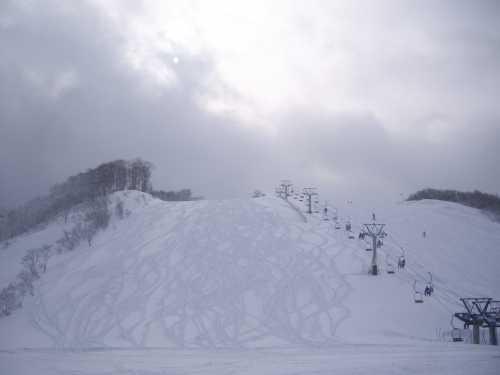 雪ねこさん